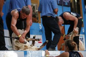 La catégorie de la «tonte machine» au 18e championnat mondial de tonte de moutons.