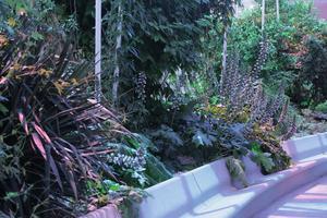 Des palmiers et toutes sortes de plantes exotiques poussent sous le toit de verre de la galerie d'Artem. ©MDessaux