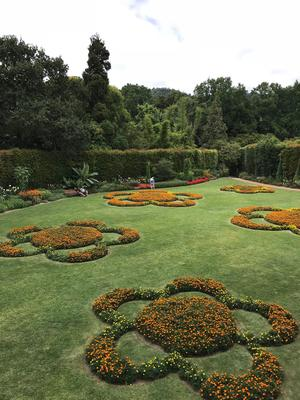 Massifs de rose d'Inde du jardin Terra Nostra.