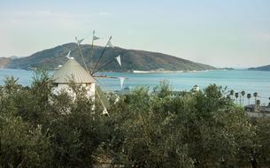 Shodoshima, l'île aux olives japonaise