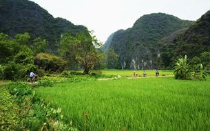 À bicyclette dans les rizières du Vietnam