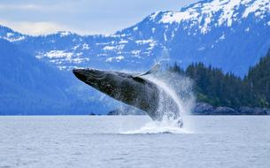 En Alaska, l'aventure «essentielle» d'Erik Orsenna