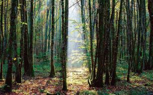 Découverte en avant-première du 11e Parc National dans les forêts de Champagne et Bourgogne