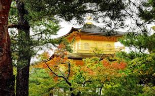 Balade poétique et automnale à Kyoto