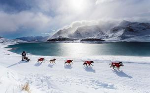 Sur la piste de La Grande Odyssée Savoie-Mont-Blanc, événement annuel du chien de traîneau
