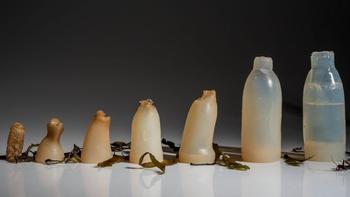 Le processus de décomposition commence dès que la bouteille est vide. ©Dezeen