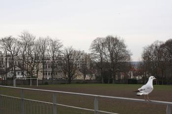Un terrain de rugby, un autre de football, mais aussi du tennis et du volley: tout est fait pour que les élèves de Ginette fassent du sport le jeudi après-midi. © Louis Heidsieck