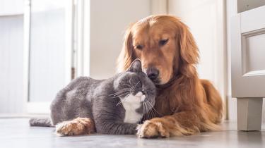 Royal Canin développe une gamme individualisée d'alimentation