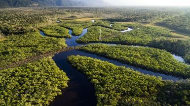 Adresses web: Amazon gagne sa bataille contre les pays d'Amazonie