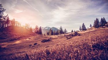 Sécurité, agriculture, forêts, vin... Ce que la hausse des températures de 2,5°C changerait