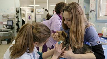 Grands Reportages en immersion dans les écoles vétérinaires