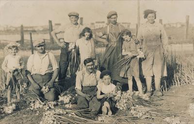 La famille Kersanté a exploité la ferme de Saint-Denis jusqu'en 2016. Ici la récolte d'oignons au début du XXe siècle.