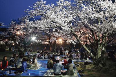 <i>Hamami </i>se fête aussi en nocturne comme ici dans un parc de Tokyo.