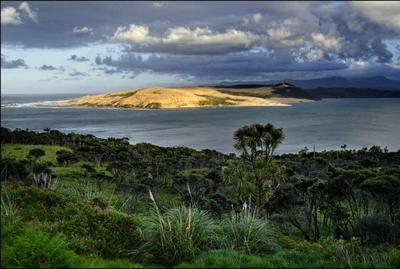 En Nouvelle-Zélande, paysage de l'Ile du Nord.