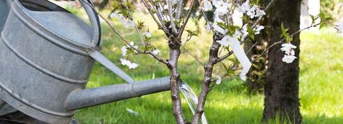 Jardin: comment limiter la corvée d'arrosage