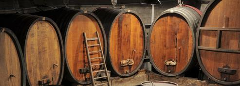 En Alsace, la vigne à l'aveugle et au bout des doigts
