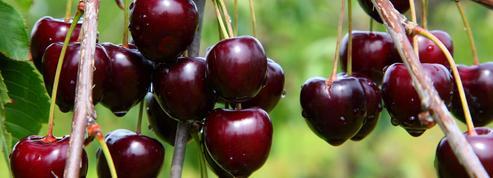 Arbres fruitiers: pour réussir, partez du bon pied!