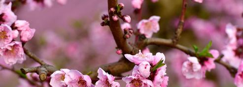 Jusqu'à la fin du siècle, le printemps ne démarrera plus jamais le 21 mars