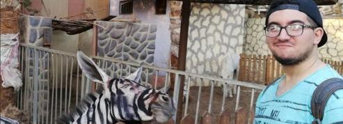 Un étudiant égyptien découvre qu'un zoo fait passer des ânes pour des zèbres