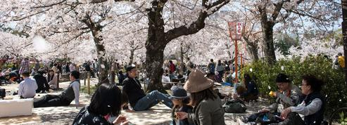 Au Japon, le culte millénaire des «sakura»