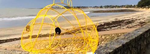 En Bretagne, un poisson-poubelle pour préserver les océans