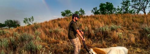 Safari made in Texas: ces incroyables chasses d'animaux exotiques dans des ranchs privés