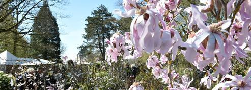 Jardin: Saint-Jean-de-Beauregard fête ses 35 ans ce week-end