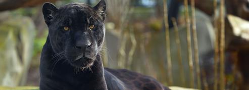 Le Parc zoologique de Paris fête ses 5 ans