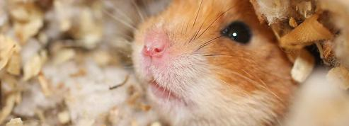 Je lègue toute ma fortune à Karl, mon hamster