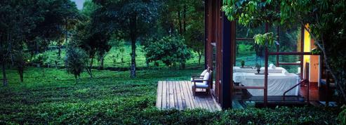 4 hôtels dans un jardin de thé