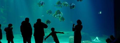 Nausicaá: un aquarium se fissure, des centaines de sardines meurent