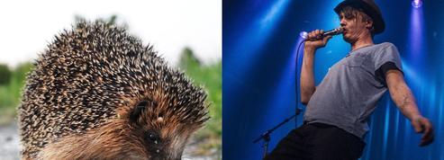 Pete Doherty hospitalisé après une attaque d'un hérisson sauvage