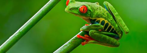 Un million d'espèces sont menacées d'extinction sur la planète