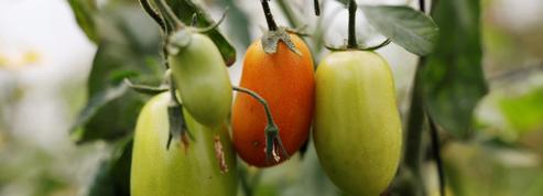 Une pétition contre les serres chauffées servant à produire des légumes bio