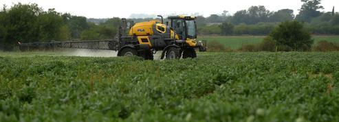 Ce soja OGM sud-américain dont la France ne peut se passer