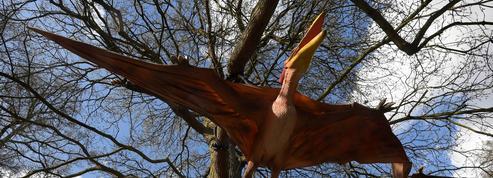 Les ptérodactyles volaient dès l'éclosion