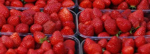 Après l'affaire des kiwis italiens, de fausses fraises françaises dans le Lot