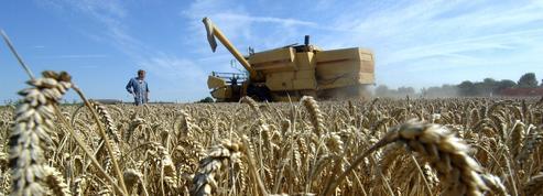 Le groupe chinois qui avait acheté près de 3000 hectares en France a fait faillite