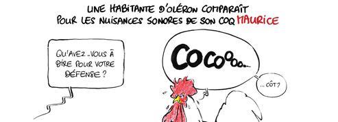 Le dessin d'Ixène: les nuisances du coq Maurice