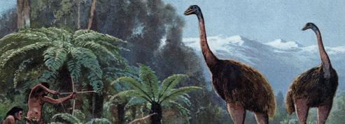 Des autruches géantes ont côtoyé les premiers Européens