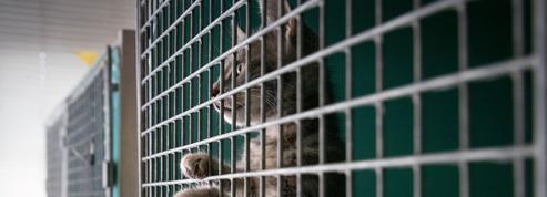 Abandons massifs d'animaux en été: les initiatives françaises pour y mettre fin