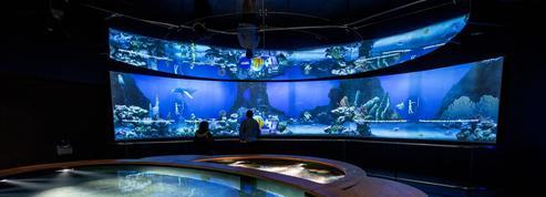 Plongée miraculeuse dans l'océan du futur à la Cité de la Mer de Cherbourg