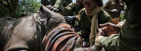 Environnement: les Rangers, ces héros oubliés de la conservation