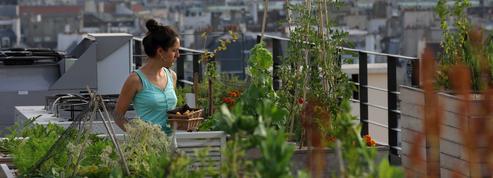 L'agriculture urbaine, entre belles promesses et déceptions