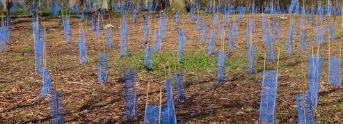 Où planter des arbres? Des chercheurs évaluent les terres disponibles à 900millions d'hectares