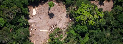 L'Amazonie dans le viseur de Bolsonaro