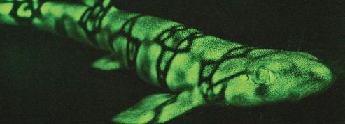 Des requins qui s'habillent de vert fluo