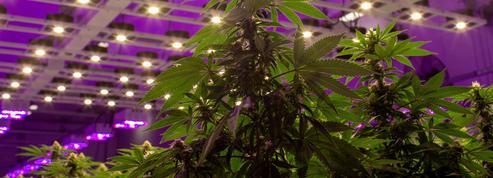 Emmac veut devenir le leader européen du cannabis thérapeutique et «bien-être»