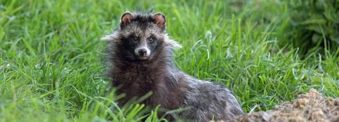Plantes, animaux: l'Europe face à l'invasion des espèces exotiques