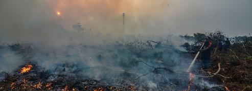 Les feux de forêt n'épargnent pas l'Asie du Sud-Est
